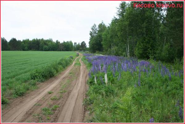 Июнь, дорога в Карпово