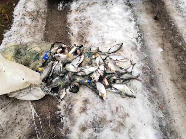 На реке Кондошка был задержан череповчанин за незаконный вылов рыбы в период нереста